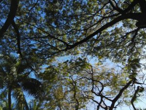 Huawei Mate S Camera Sample_2