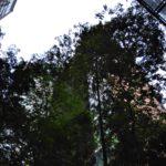 ASUS ZenFone 4 Max Pro Camera Sample_3